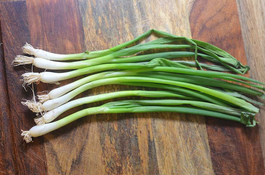 regrow green onions from roots