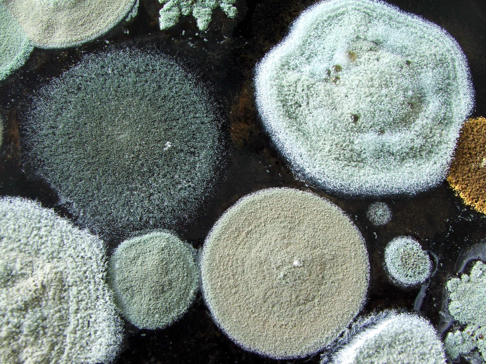 Food related mold allergy